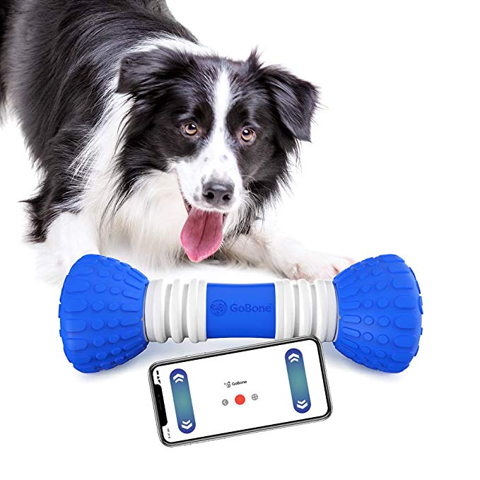 Pets play and exercise with monitoring