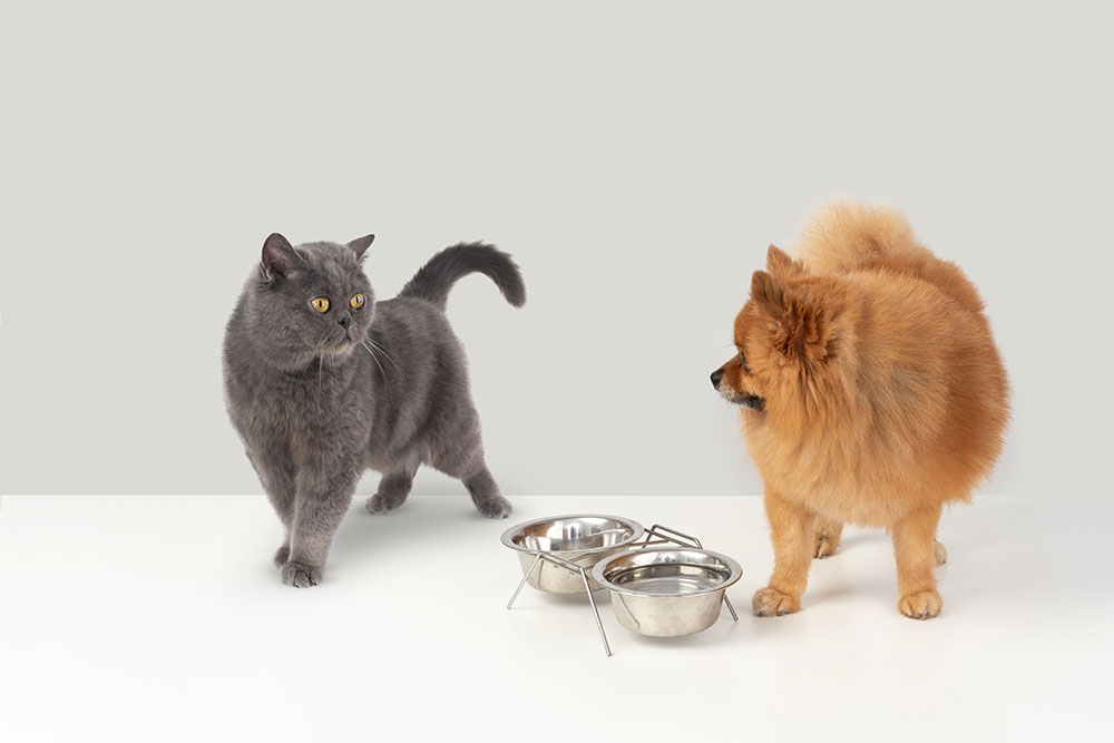 Pets Feeding